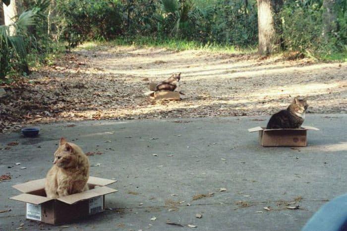 Katte mysterie