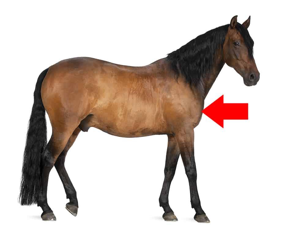 e03acf3e Den hestequizen! Hva kan du om hester? - Netfun.no